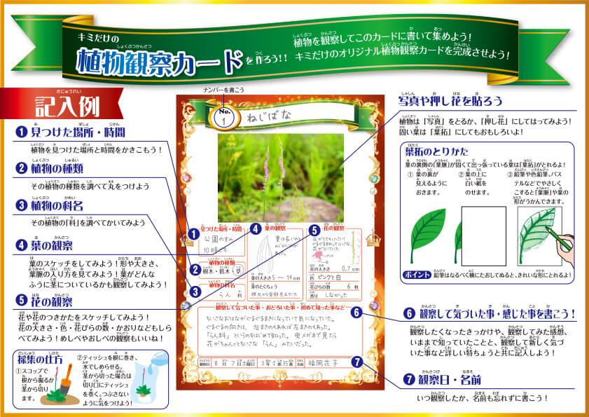植物観察カードの記入例