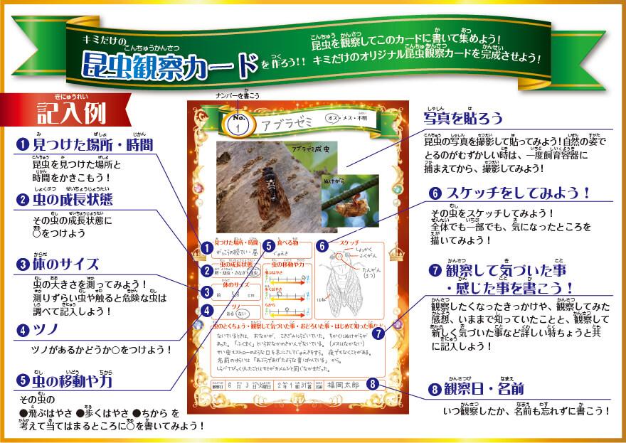 昆虫観察カードの記入例
